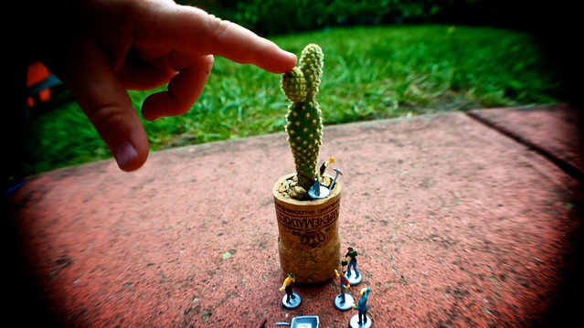 anteketborka.blogspot.com, cactus6