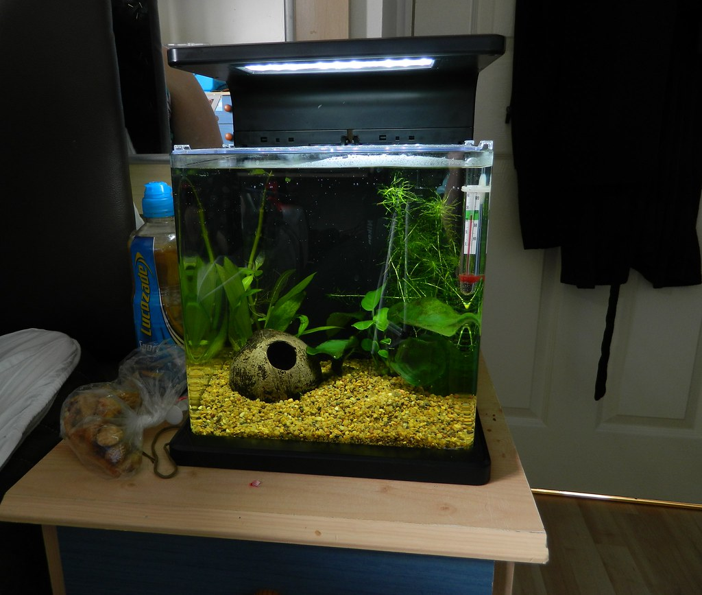 Fish for nano aquarium freshwater - It S Currently Home To My Betta I Know The Recommended Is 30l But I Do Strict Maintenance And Testing On My Tanks And There Is Plenty Of Flow And Plants To