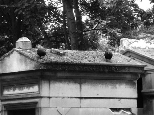 Under the gaze of the Monmartre crows