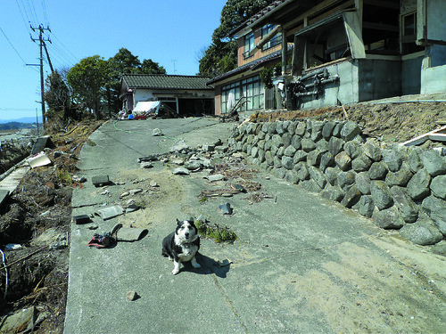 P.59這是我的家!這隻柯基犬從稍遠的地方領著我,似乎向我介紹家園。 被遺忘的動物們 行人出版社提供