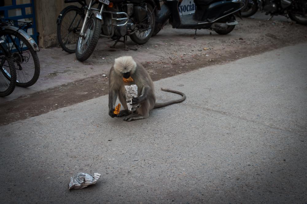 Monkey stole a pie