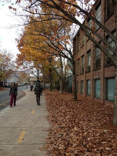 Fall in Davis
