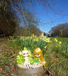 Daffodils at Brodie Castle!