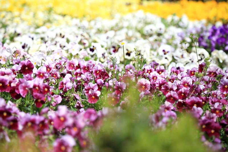 jardin botanique madrid fleurs colorées