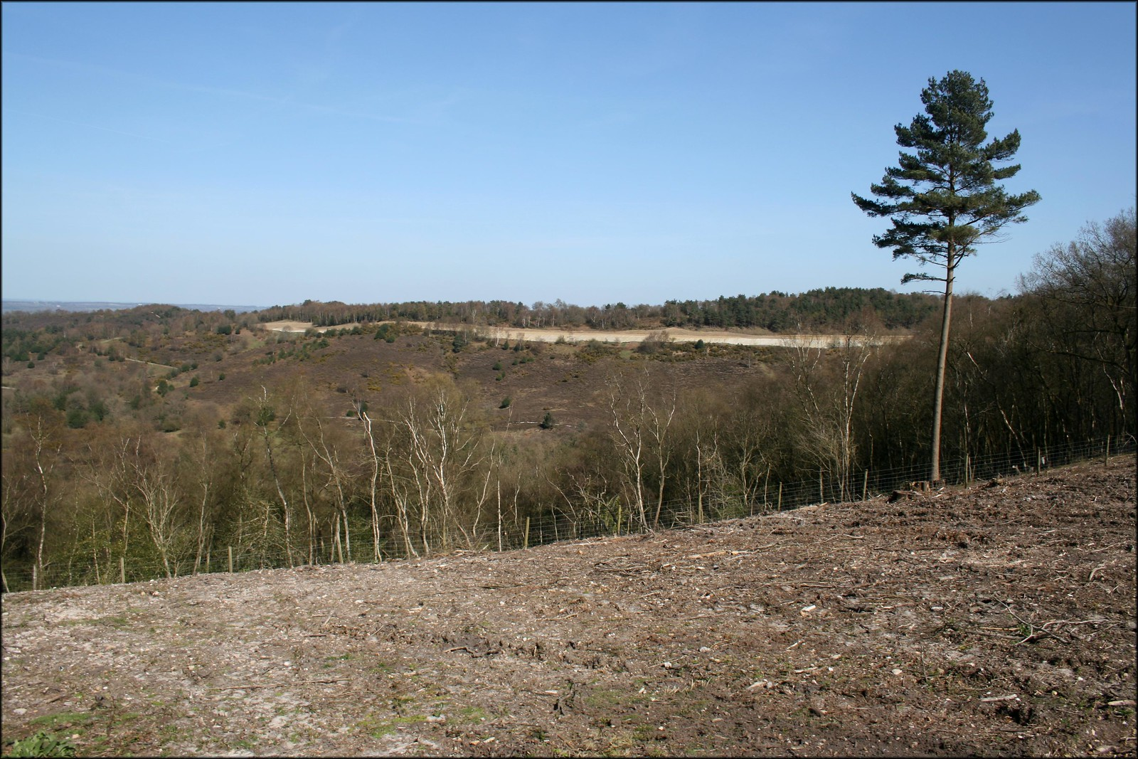 Hindhead common The former A3 road can be seen at the back of the picture.