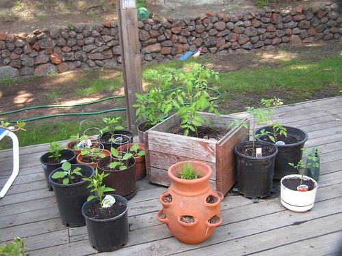 containter pots