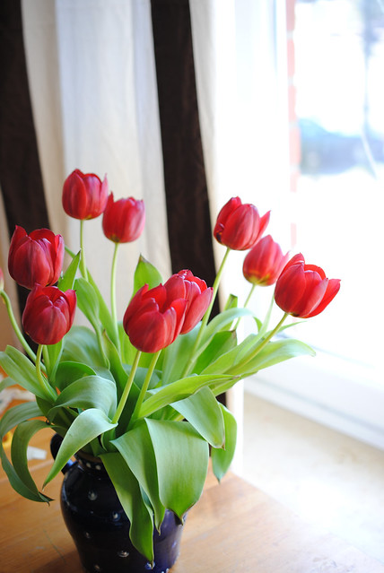 Red tulips and striped curtains
