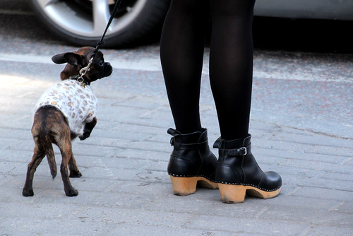 Clogs and Dogs