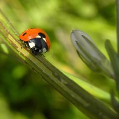 ✿ Ladybug ✿