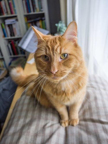 Emile The Cat 1