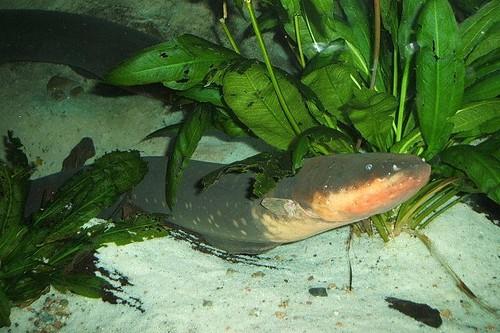 Elect eel