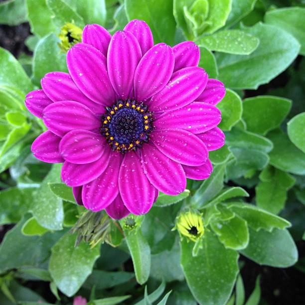 #flower #purple #pink #green