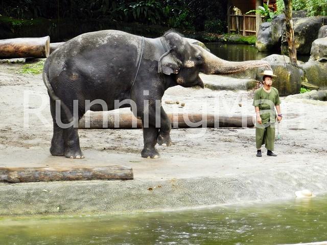 Singapore Zoo 08