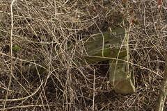 20120224 003 Croxley Green Depot Headshunt Remnants