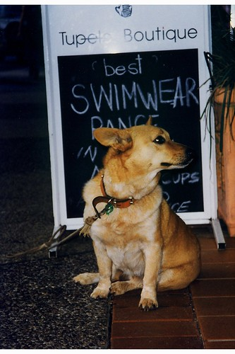 Gorgeous dog by a shop sign in Byron Bay