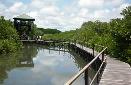 mangrove information center