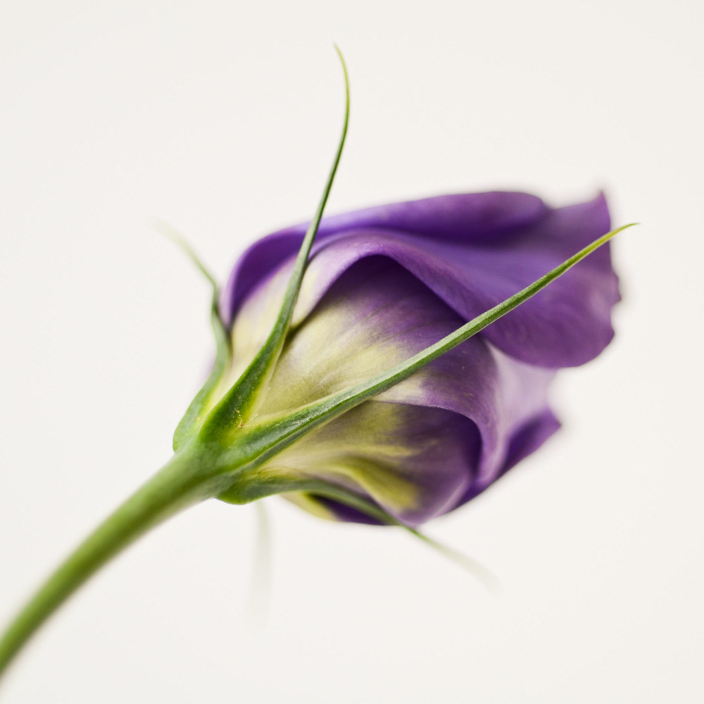 the other side - lysianthus