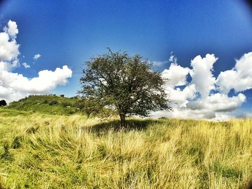 無料写真素材, 自然風景, 樹木, 草原・草, 風景  イギリス