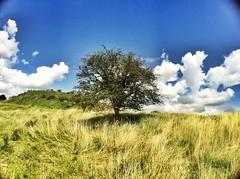[フリー画像素材] 自然風景, 樹木, 草原・草, 風景 - イギリス ID:201208081600