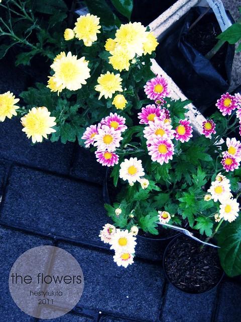 IMG_1722_kthe flowers