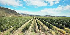 Los dos maravillosos extremos del vino argentino