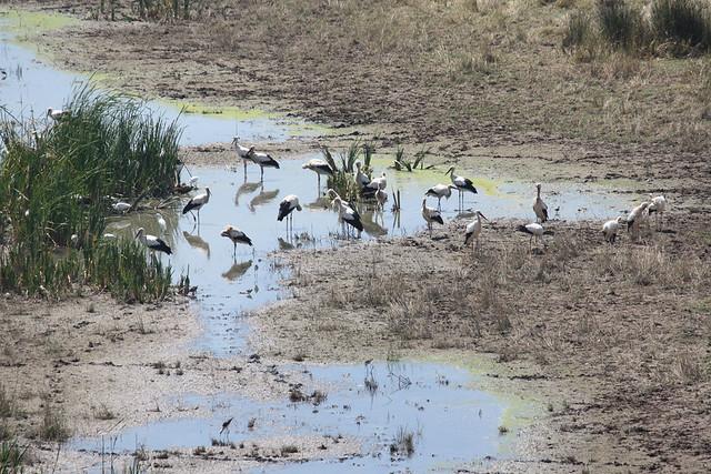 Birds in Aiguamolls de l'Empordà