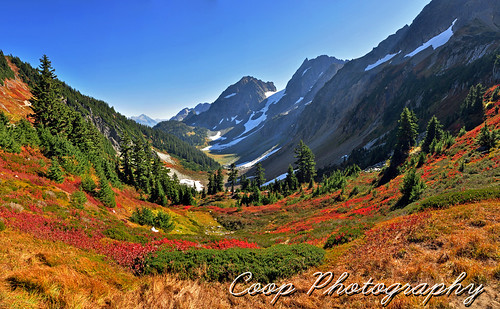 park autumn red wild panorama 6 snow mountains color fall nature photography washington nikon october arm 10 pano north pass hike glacier blueberry trail national valley cascades wa coop northern reds bushes cascade 2012 d90 sahale