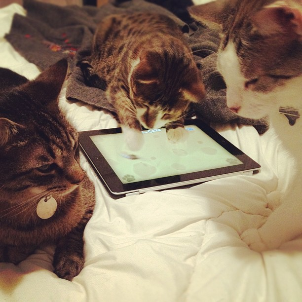 From street cats to fat princes. Our rescue cats now enjoy luxuries like iPad games & down comforters....