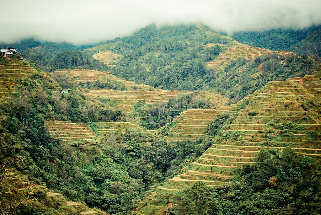 Ifugao, Igorot