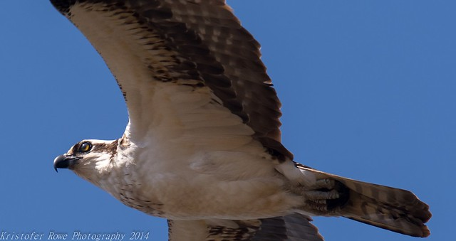 Osprey flight 4_10