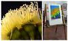 photos that inspire art