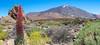 Teide (Pano)