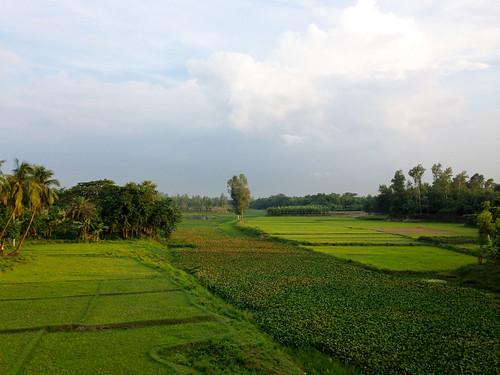 bridge green nature field bangladesh madla bogra