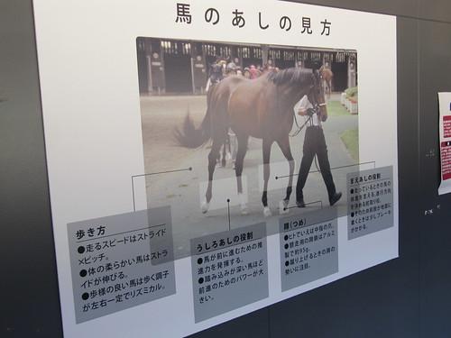 函館競馬場のダッグアウトパドック内の説明書き