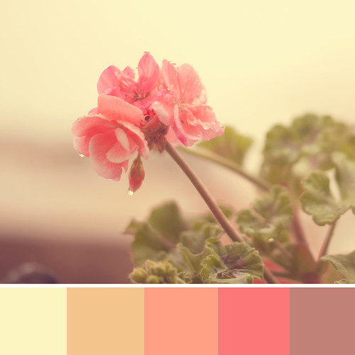 Sweet Palette by Vanina Vila {Photography}