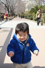 とらちゃん@目黒川遊歩道(2012/3/20)