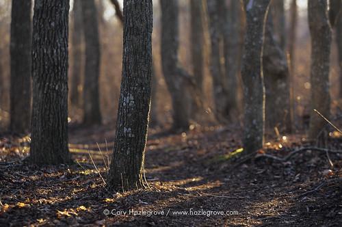 nantucket swamp hardwood squam ncf swampmaplesquamswamp