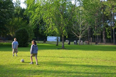 Soccer on alpaca farm