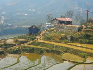 Muong Hoa Valley field