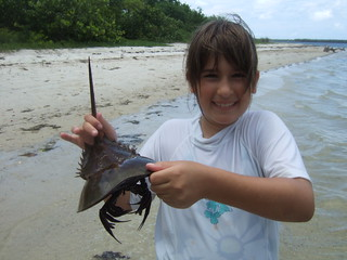 Sophie with a horseshoe crab