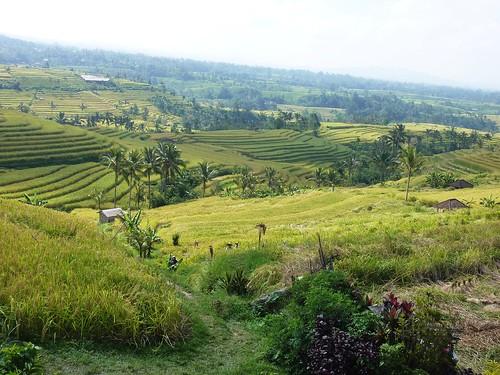 Bali-Route Legian-Jatiluwih (68)