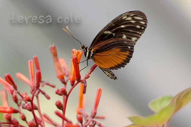 butterflies-1-18