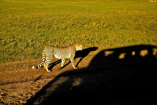 Maasai Mara-6