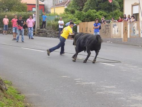 touros 8