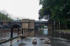York In Flood July 2012-50