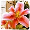#flower #flowers #germany