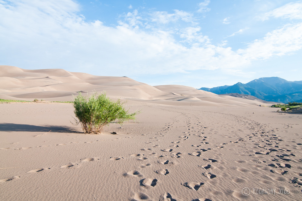 The Great Sand dunes and the tree