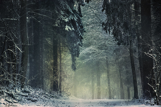 'Winterwald', by Robin Halioua.