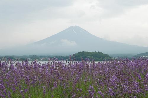 ★富士山とラベンダー