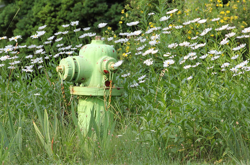 michigan petoskey bayview firehydrants flowers daisies daisy roadside firedepartments flowers11241 firehydrants11241 bayview11241 petoskey11241 landscapes11241 landscape11241 landscapes mi photography miphotography crookedtreeartscenter petoskeycameraclub petoskeyphotographyclub crookedtreephotographicsociety robertcarterphotographycom ©robertcarter
